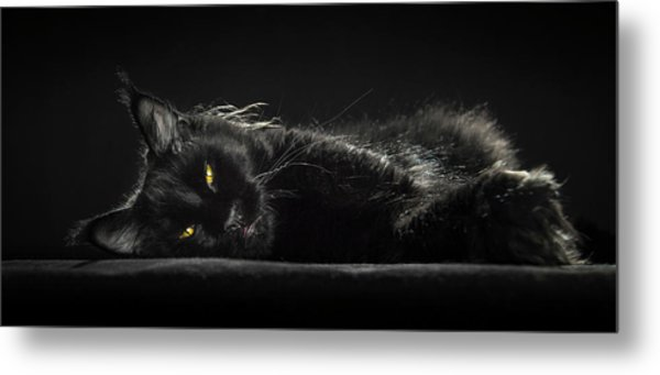 A Little Bit Tired Metal Print