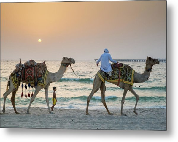 A Little Boy Stares In Amazement At A Camel Riding On Marina Beach In Dubai, United Arab Emirates Metal Print