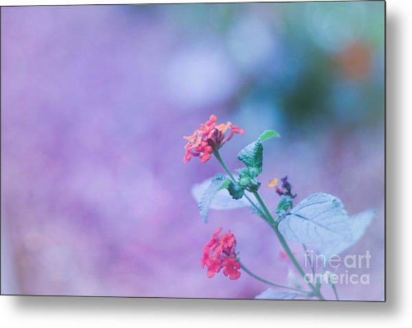 A Little Softness, A Little Color - Macro Flowers Metal Print