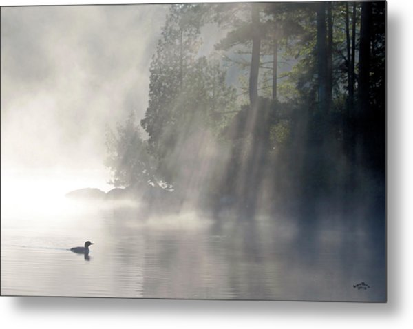 A Loon In The Mist Metal Print