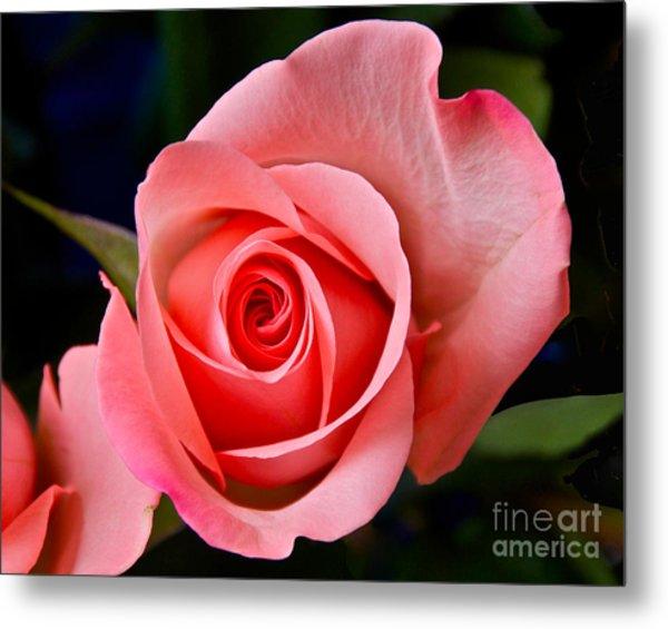 A Loving Rose Metal Print