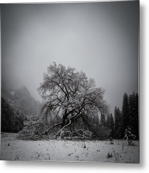 A Magic Tree Metal Print