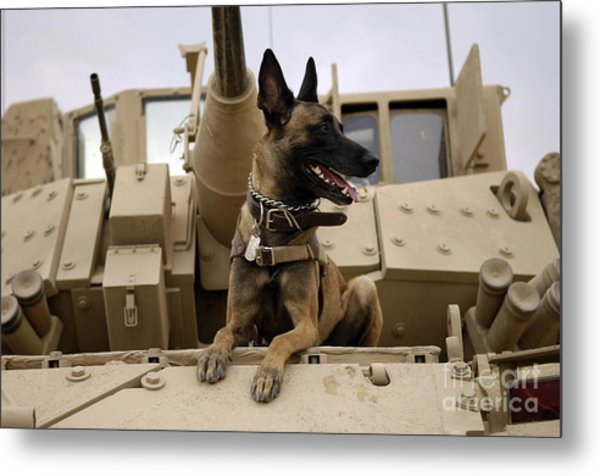 A Military Working Dog Sits On A U.s Metal Print