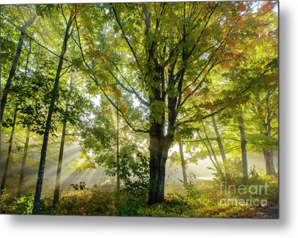 A Misty Fall Morning Metal Print