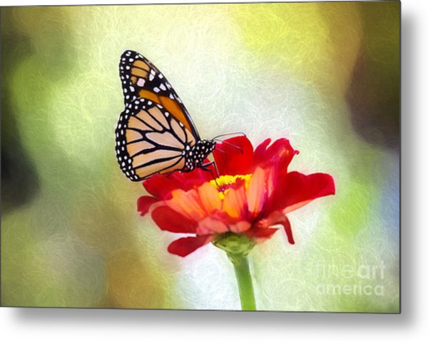 A Monarch Moment Metal Print