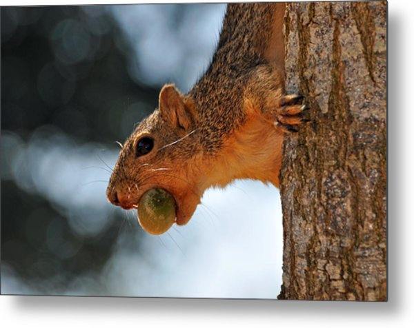 A Mouthful Metal Print by Teresa Blanton