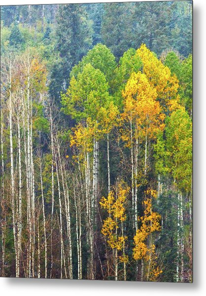 A Muted Fall Metal Print