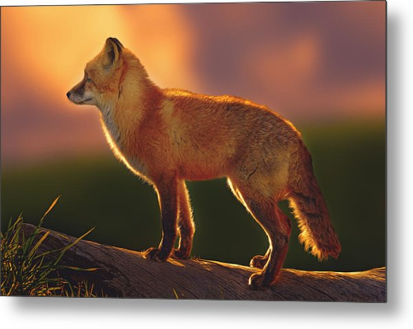 A New Day Dawning  Metal Print