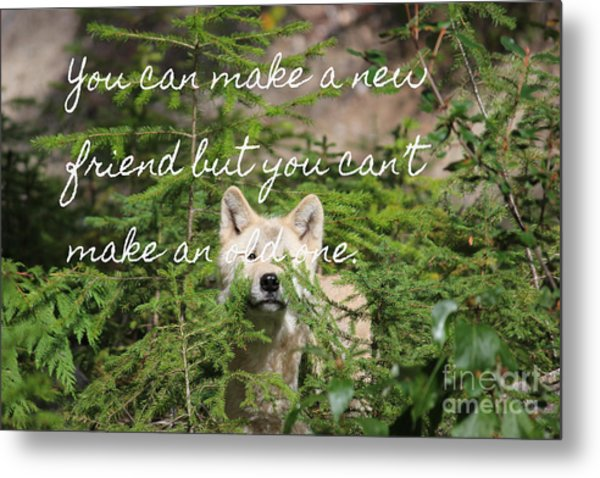 A New Friend Metal Print