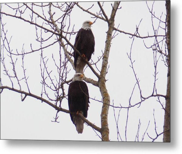 A Pair Of Eagles Metal Print