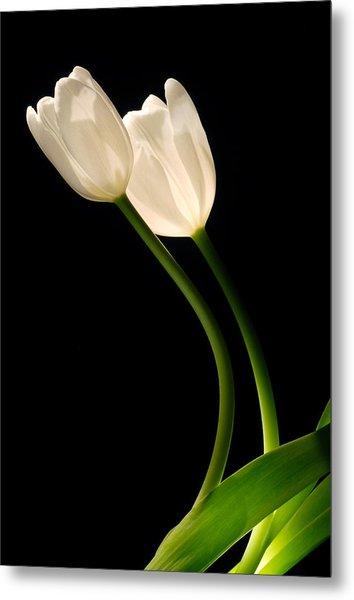 A Pair Of White Tulips Metal Print