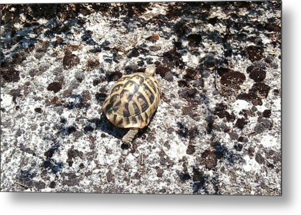 A Pal We Found In Greece Metal Print