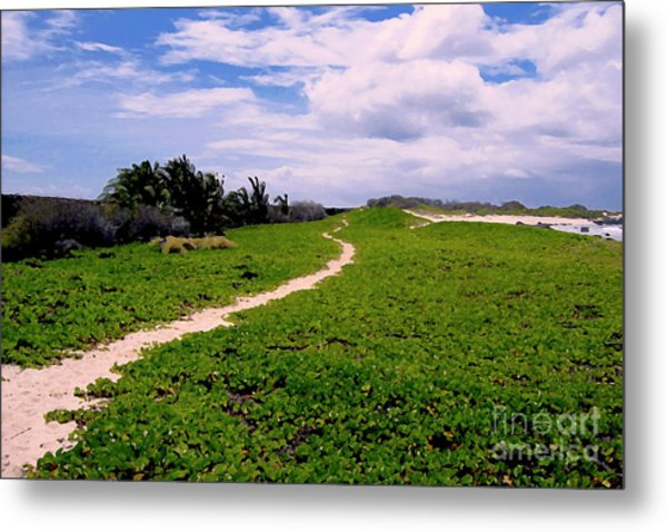 A Path Thru The Dunes Metal Print