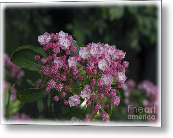 A Pink Bunch Metal Print