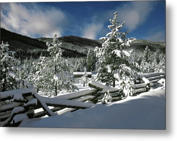 A Place In The Winter Sun Metal Print