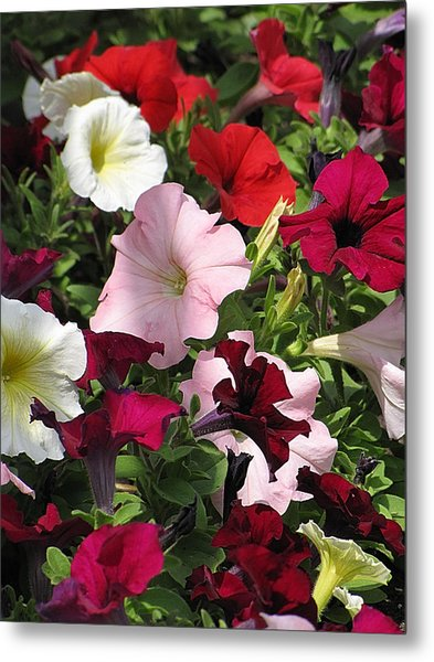A Plethora Of Petunias Metal Print