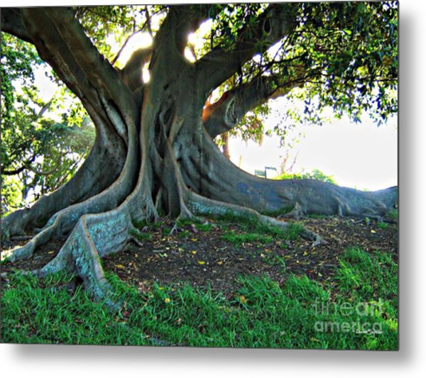 A Poem As Lovely As A Tree Metal Print