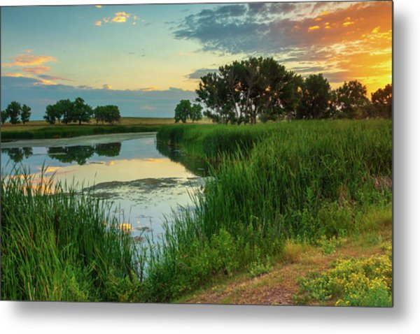 A Portrait Of Summer Metal Print