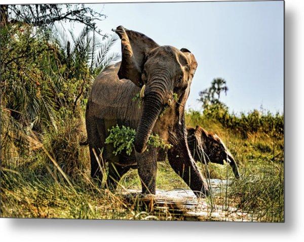 A Protective Mama Elephant With Calf  Metal Print