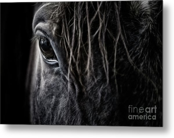 A Race Horse Named Tikki Metal Print