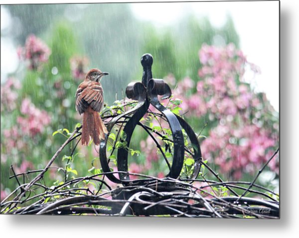 A Rainy Summer Day Metal Print