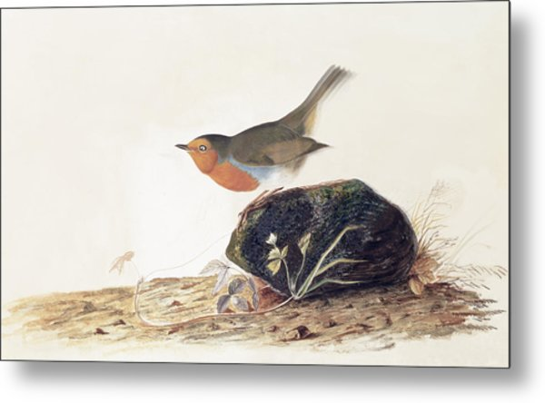 A Robin Perched On A Mossy Stone Metal Print