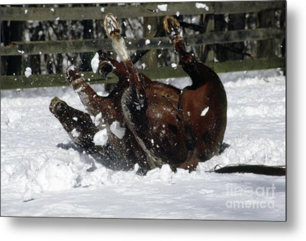 A Roll In The Snow Metal Print