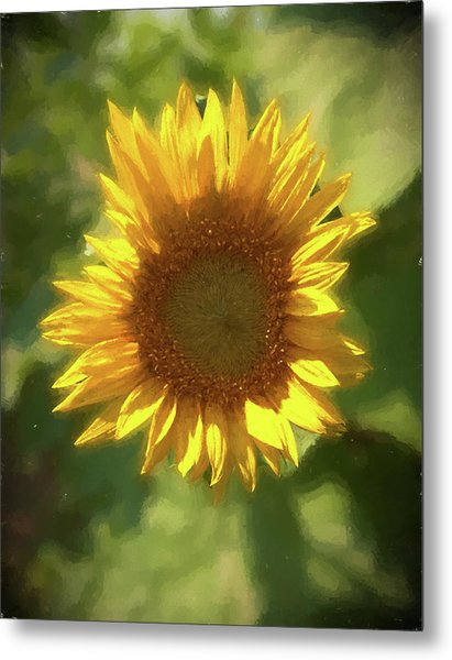 A Single Sunflower Showing It's Beautiful Yellow Color Metal Print