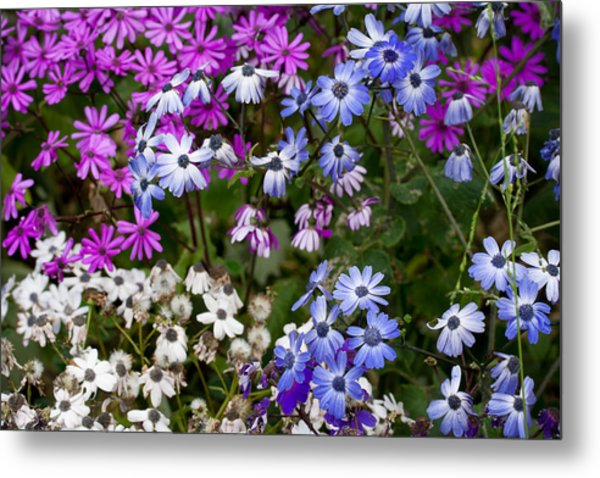 A Spring Gathering Metal Print by Karen LeGeyt