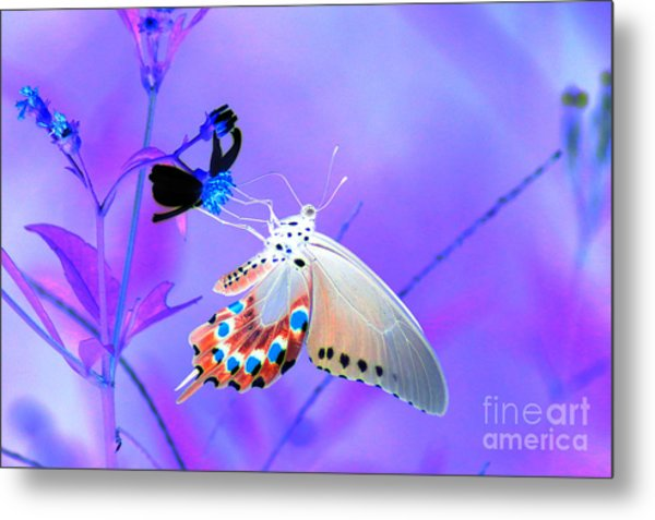 A Strange Butterfly Dream Metal Print