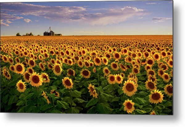 A Summer Evening In Rural Colorado Metal Print