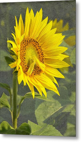 A Sunflower's Prayer Metal Print