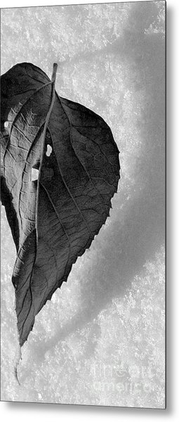 A Tattered Heart Metal Print by Julie Lueders