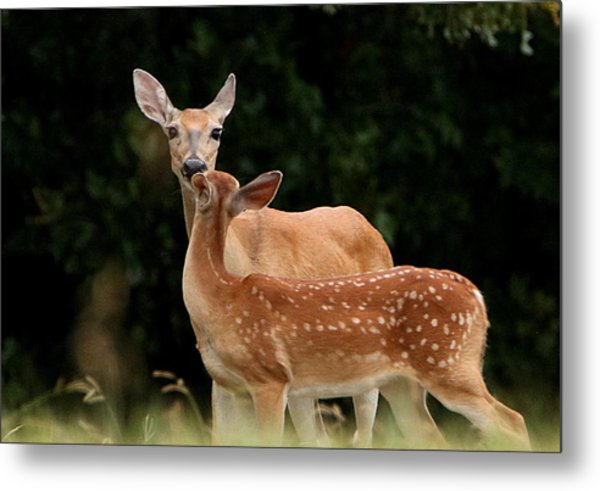 A Tender Moment Metal Print