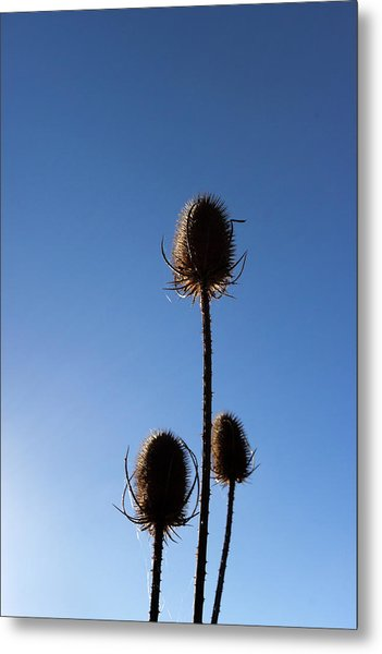 Metal Print featuring the photograph A Thriving Trio 2 by Helga Novelli