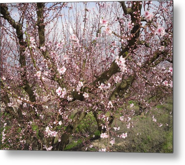 A Touch Of Pink 5 Metal Print by Susanne Awbrey