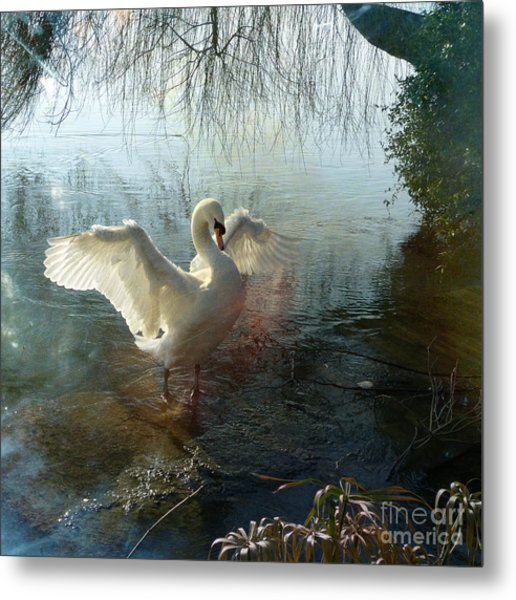 A Very Fine Swan Indeed Metal Print