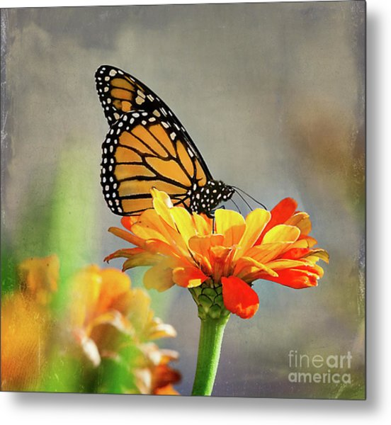 A Very Late Visitor To The Garden Metal Print