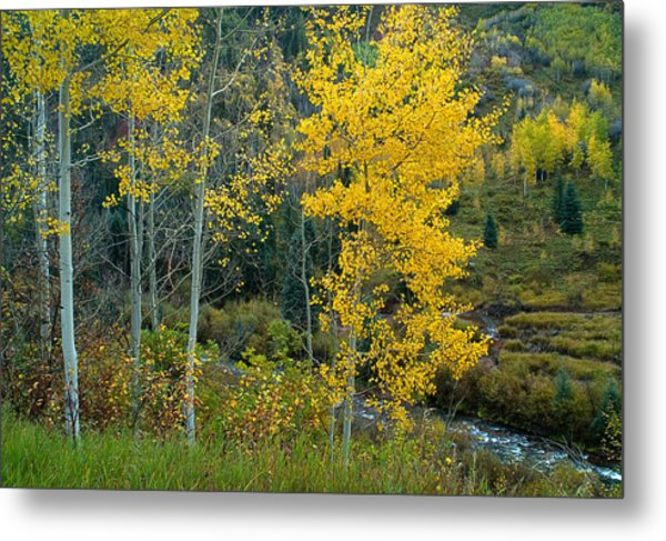 A Walk In The Aspen Forest Metal Print