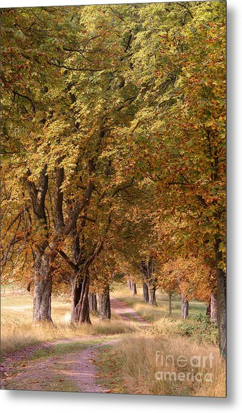 A Walk In The Countryside Metal Print