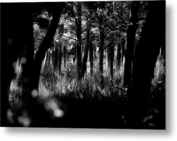 Metal Print featuring the photograph A Walk In The Woods by Jeremy Lavender Photography