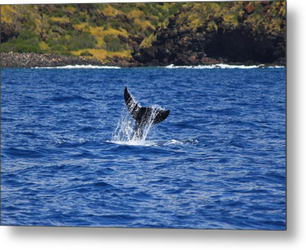 A Whale Of A Time Metal Print