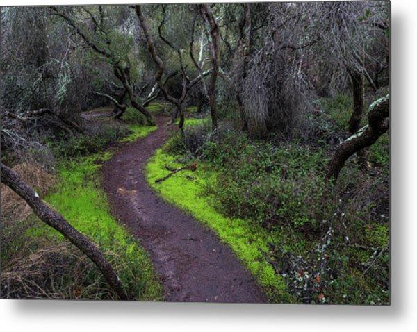 A Windy Path Metal Print