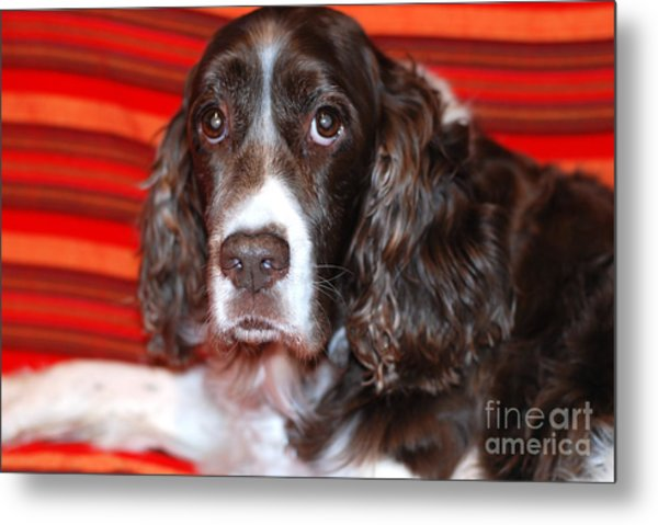 Abby Metal Print by Andrea Simon