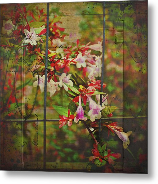 Abelia Coming Through Metal Print