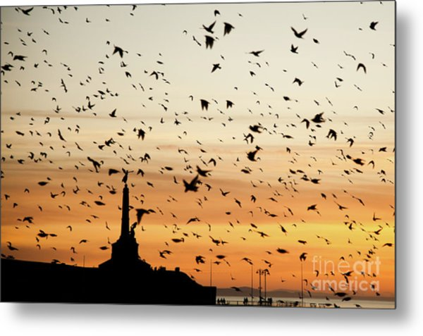 Aberystwyth Starlings At Dusk Flying Over The War Memorial Metal Print