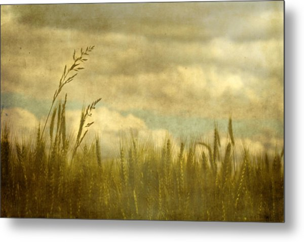 Above It All Metal Print by Rebecca Cozart