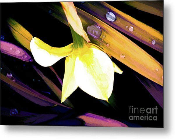 Abstract Daffodil And Droplets Metal Print