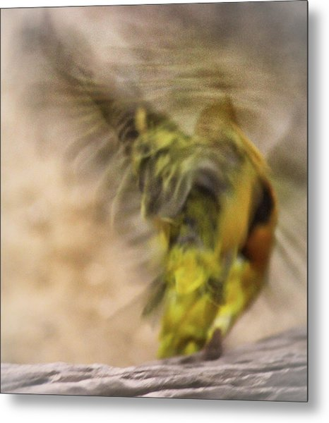 Abstract Finch Metal Print