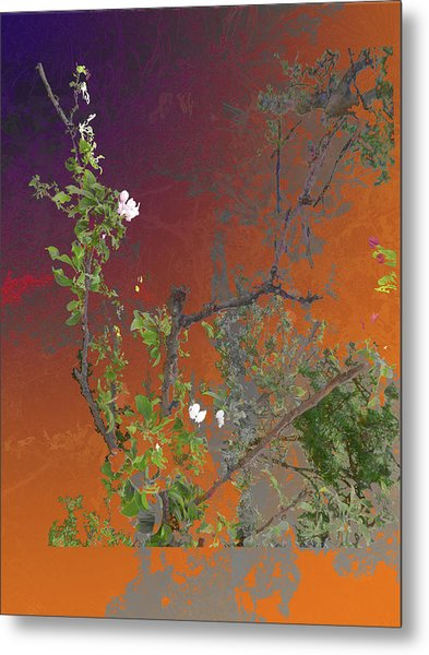 Abstract Flowers Of Light Series #13 Metal Print